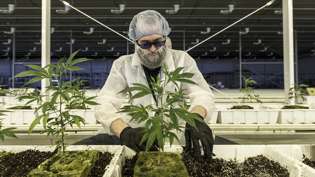 Aurora Cannabis stock drops after earnings, as revenue misses revised target – MarketWatch