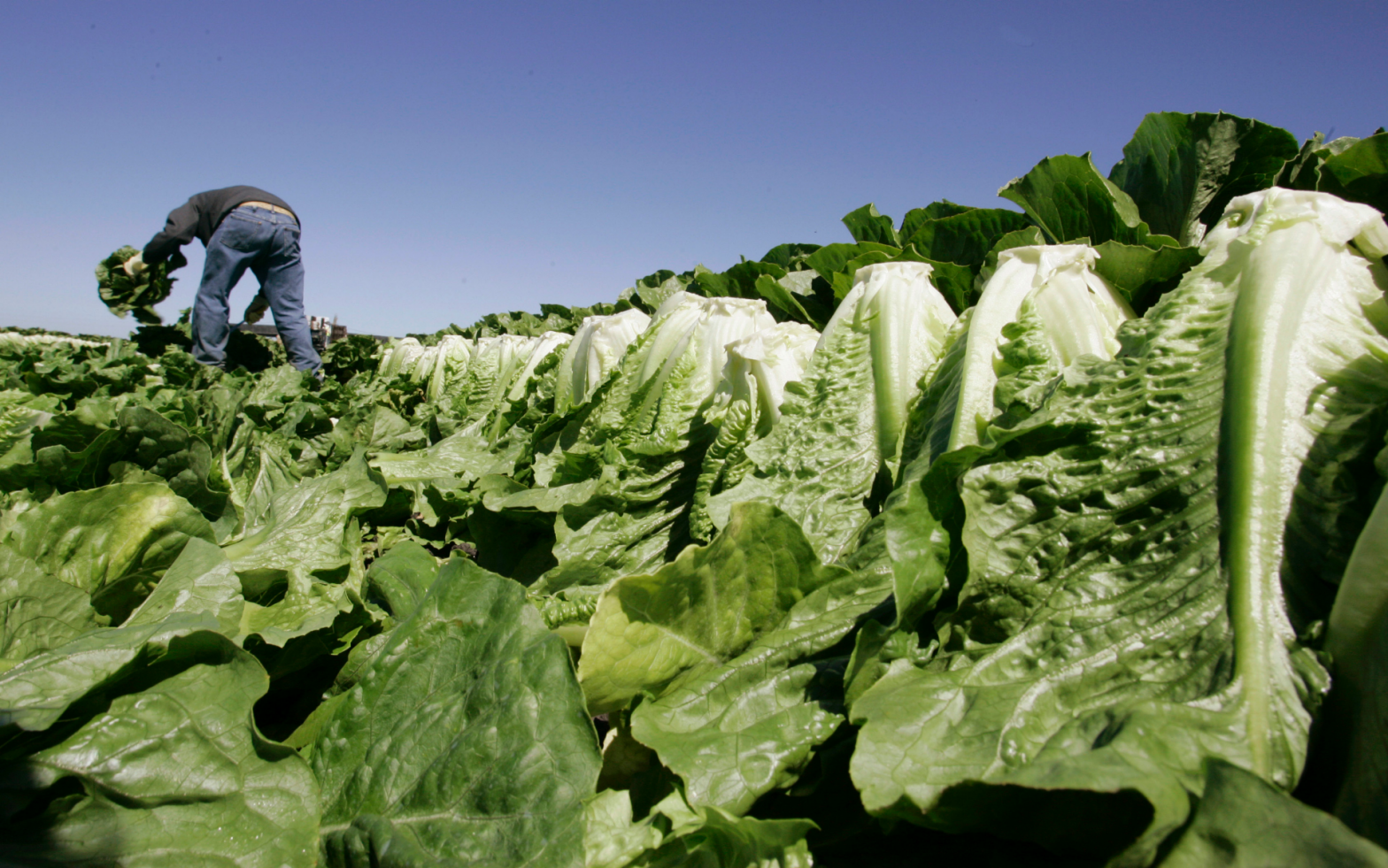 Romaine lettuce E. coli outbreak tied to California region hits 67 cases – Fox News
