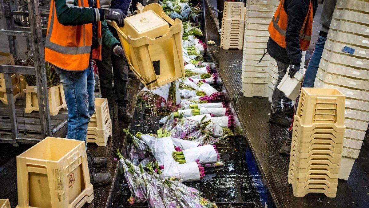 The Netherlands' Huge Flower Sector Wilts As Coronavirus Hurts Business – NPR